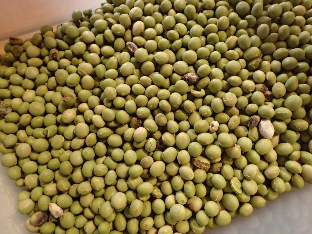青大豆の選別も進めています。