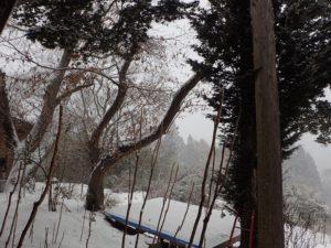 吹雪の一日です。。