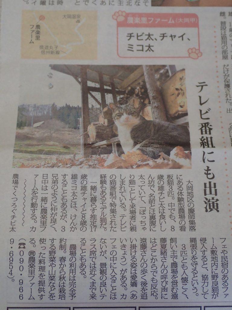 長野市民新聞の猫の日特集に、チビ太が掲載されました!