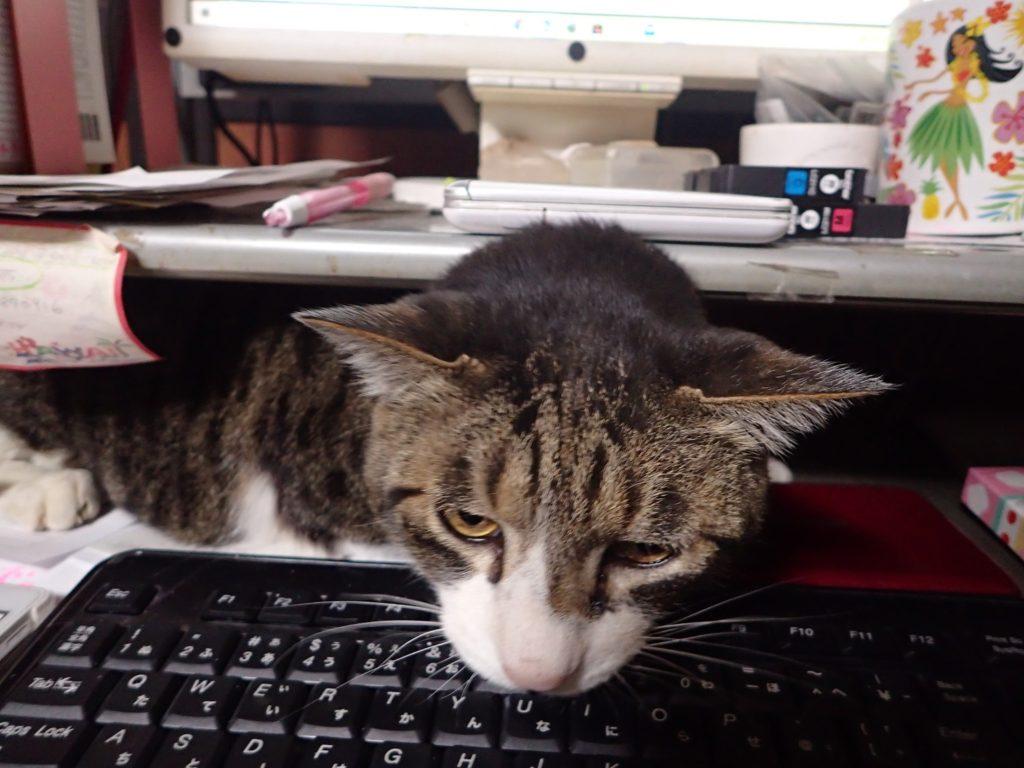 """<span class=""""title"""">猫は隙間が好きといいますが、ここまでの隙間に入らなくても、、</span>"""