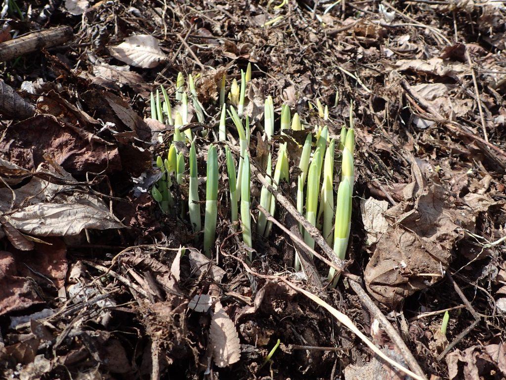 いっぽ春へ