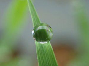 赤ちゃん稲から生まれた、水晶玉!