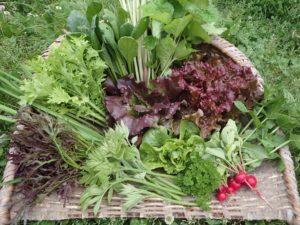 季節の野菜セット、スタートします!