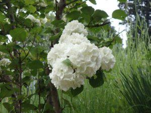 純白の花々