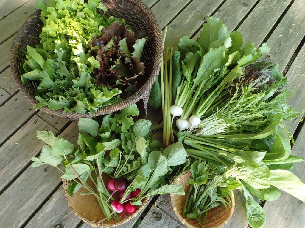 季節の野菜セットに、みやまこかぶが入りました!