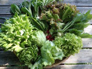 6月下旬の、季節の野菜セットです。