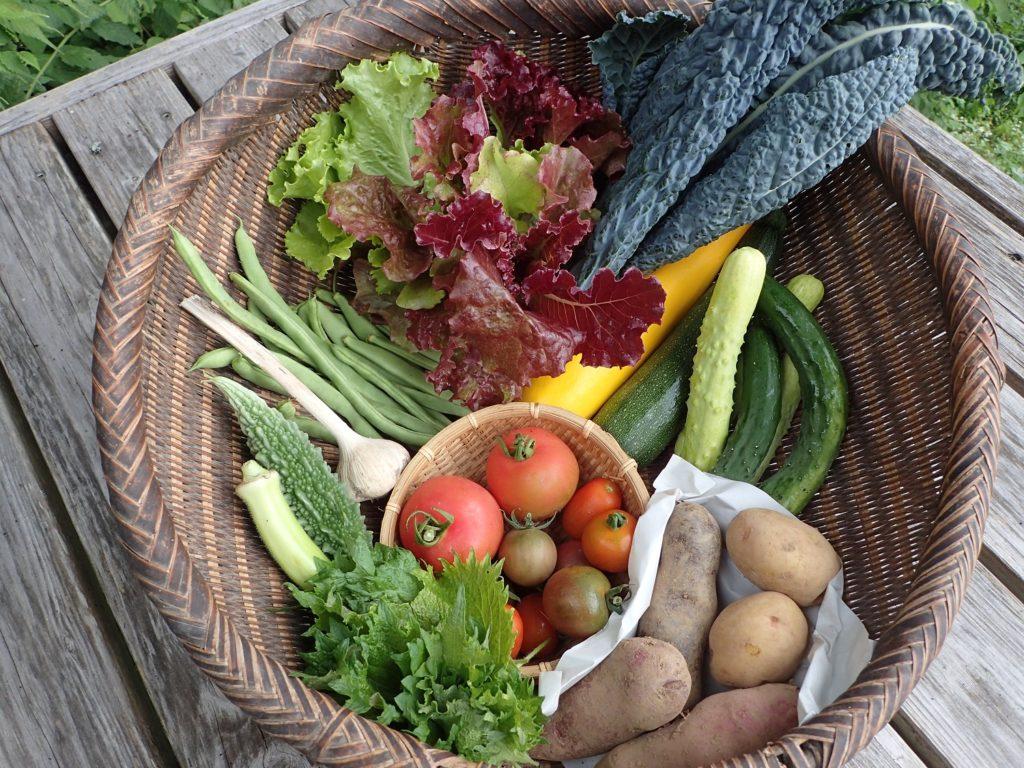 季節の野菜セット!夏野菜の詰め合わせです!
