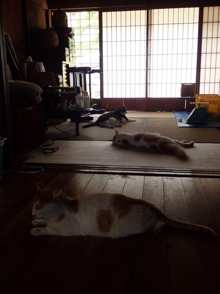 母屋で涼む、チャイ、チビ太、ミコ太。