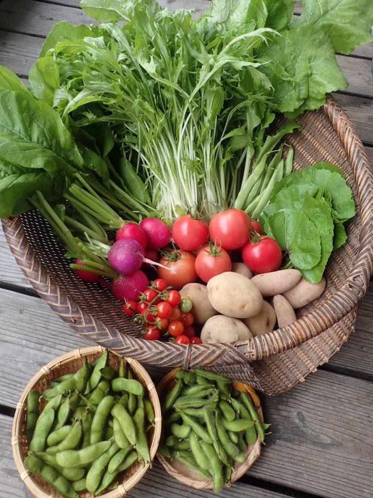 初秋の、季節の野菜セットです!
