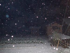 雪降る中を、ミコ太とお散歩