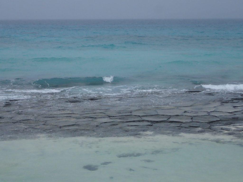 久米島の海の幸!、山の幸! その4