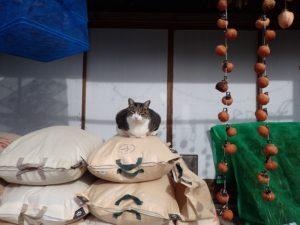 ぽっちゃり猫チビ太VSミコ太