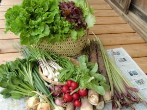 季節の野菜セット6月イメージ